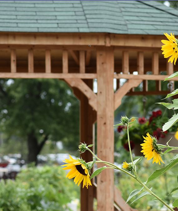sunflowers growing in front of a gazebo